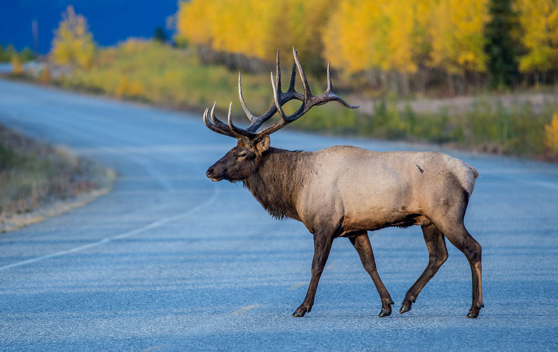 ELK EXPEDITION GOES TODAY