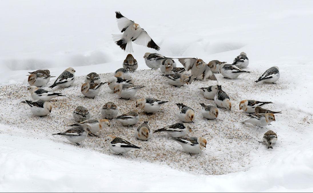 SPRING BIRDS!
