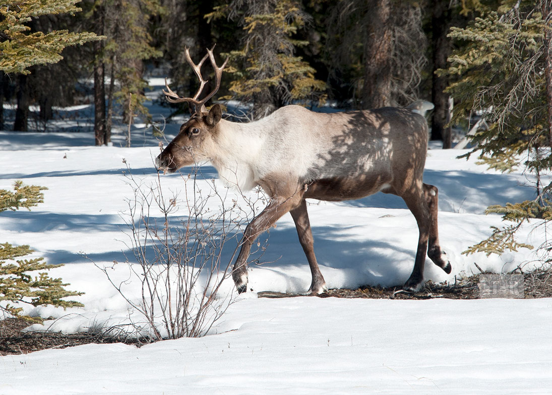 Fish, wildlife board may be in for changes